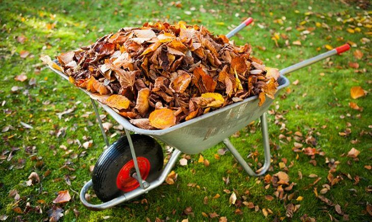 fall yard waste