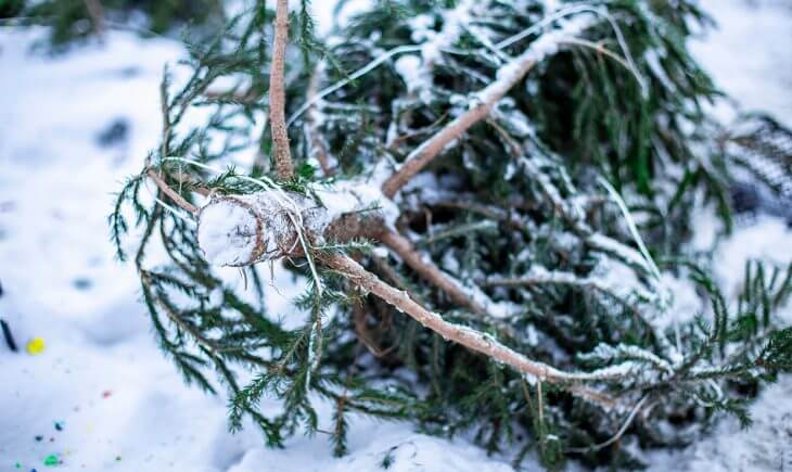 Go green and recycle your christmas tree
